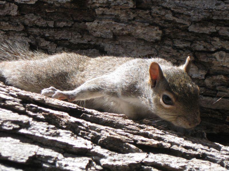 Squirrl Flat