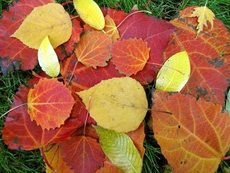 Fall+leaves+preschooler