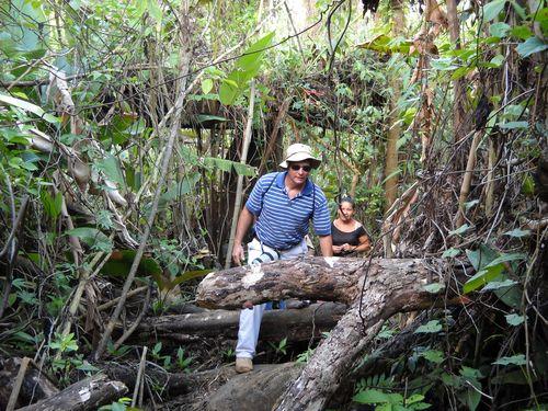 Tim Crossing Logs